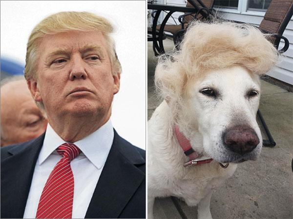 Things-Donald-Trump-looks-like-04