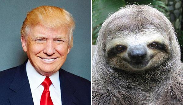 Things-Donald-Trump-looks-like-05