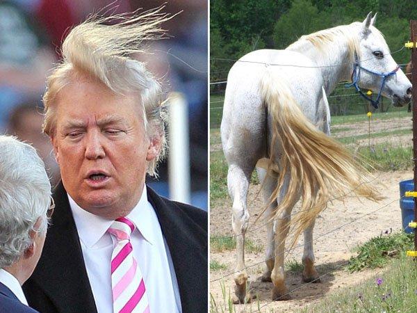 Things-Donald-Trump-looks-like-07