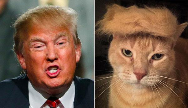 Things-Donald-Trump-looks-like-08