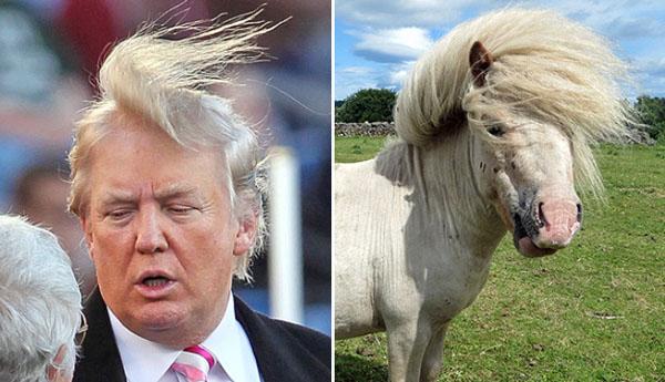 Things-Donald-Trump-looks-like-10