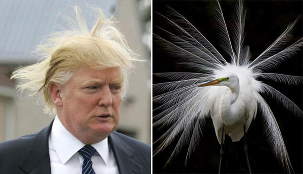 Things-Donald-Trump-looks-like-11