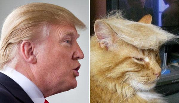 Things-Donald-Trump-looks-like-12