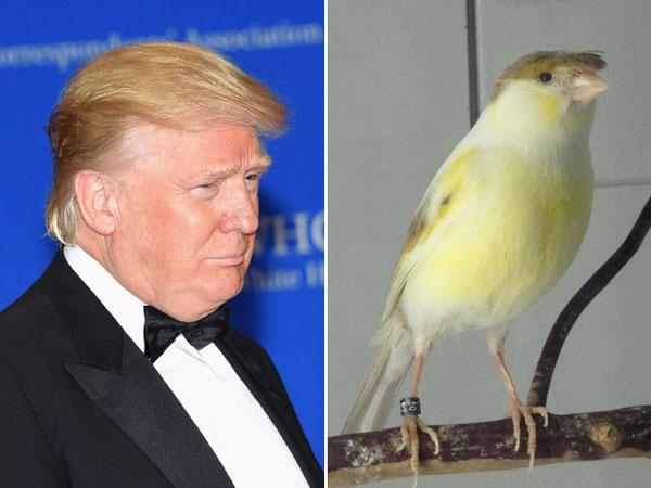 Things-Donald-Trump-looks-like-15
