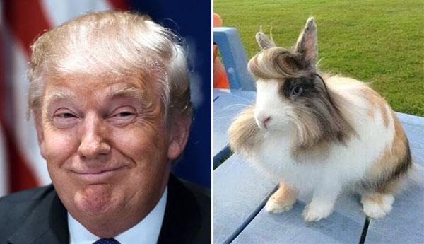 Things-Donald-Trump-looks-like-18