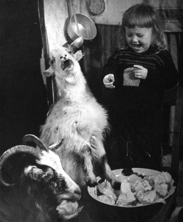 Vintage-Creepy-Old-Photos-girl-goat