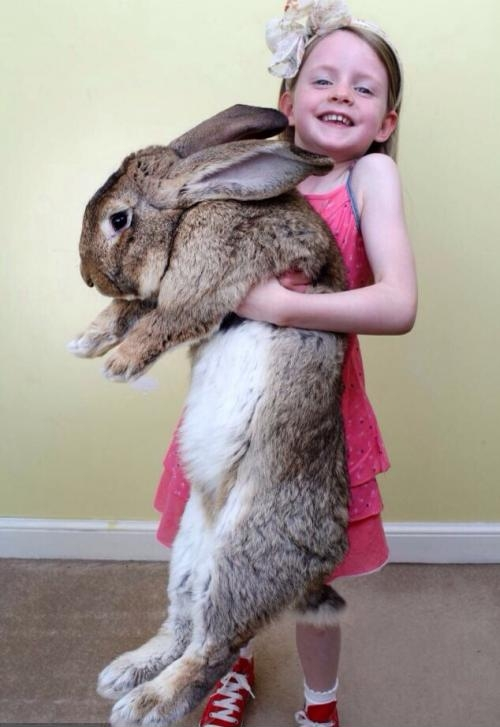 WORLDS LARGEST BUNNY.