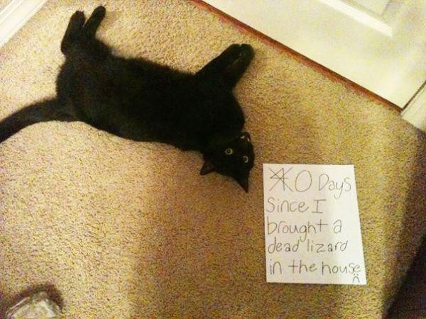 cats-are-the-original-aholes-30-photos-14