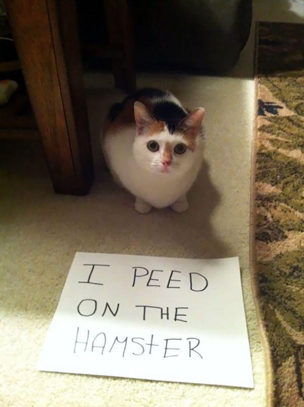 cats-are-the-original-aholes-30-photos-17