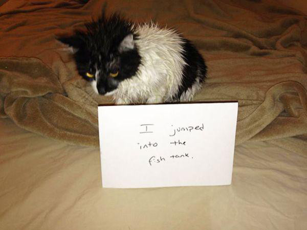 cats-are-the-original-aholes-30-photos-25