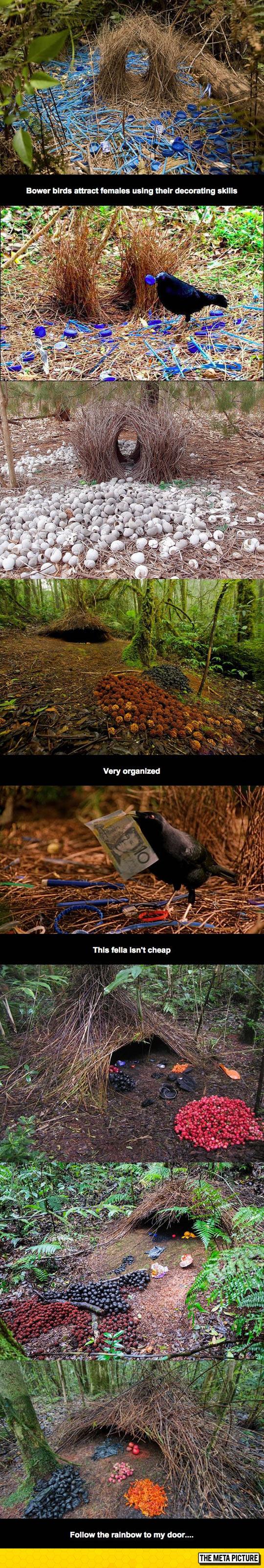 cool-Bower-bird-nest-things