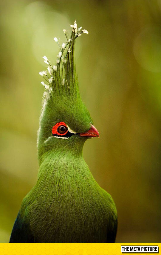 cool-bird-green-feathers-colors