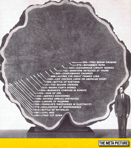 cool-old-tree-history-rings