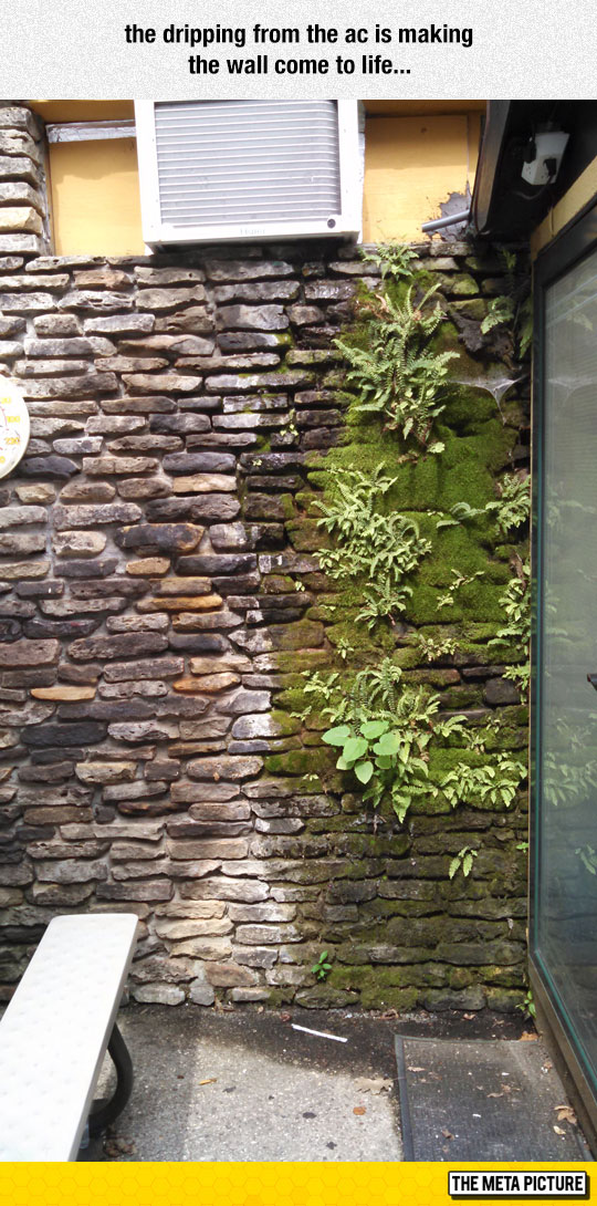 cool-wall-water-plants-growing
