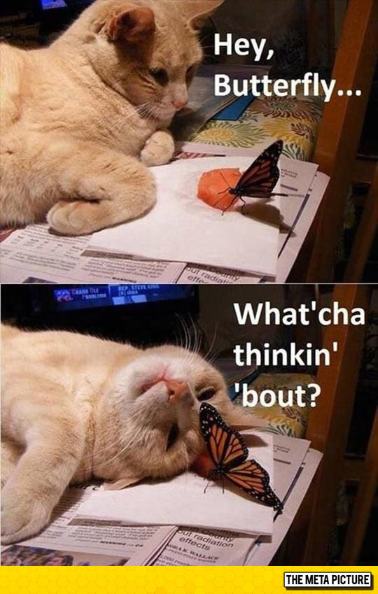 cute-cat-playing-butterfly-sleeping