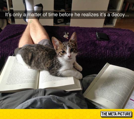 cute-cat-sleeping-book-decoy