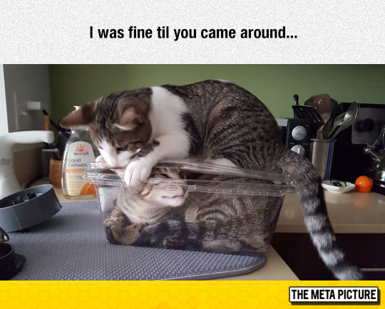 cute-cats-playing-kitchen-counter