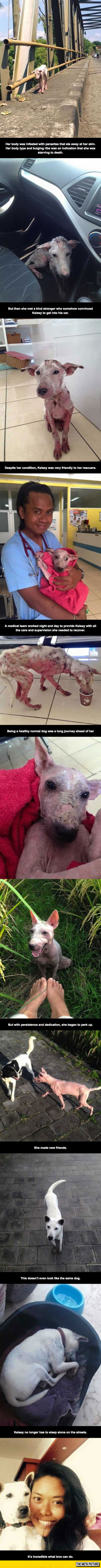 cute-dog-rescue-before-after