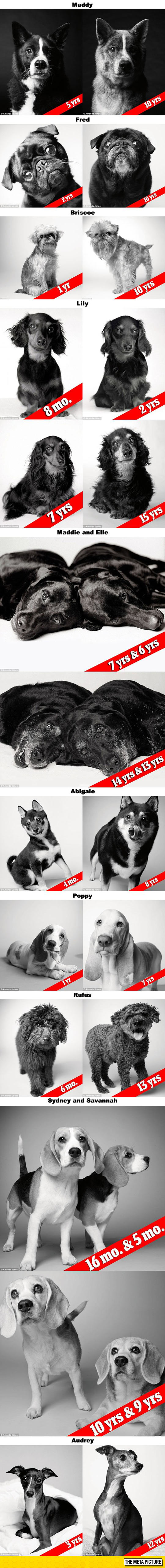 cute-dogs-getting-old-before-after