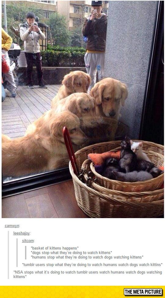 cute-dogs-looking-kitten-basket-glass