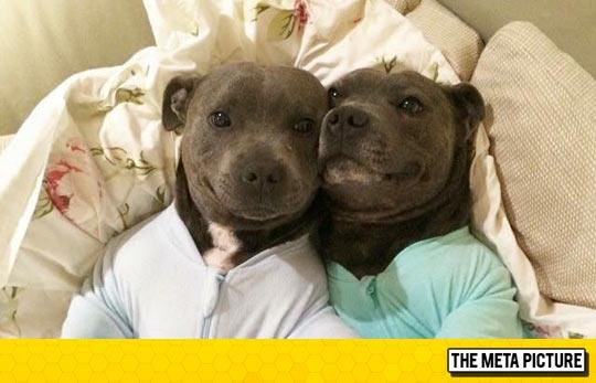 Dogs In Onesies