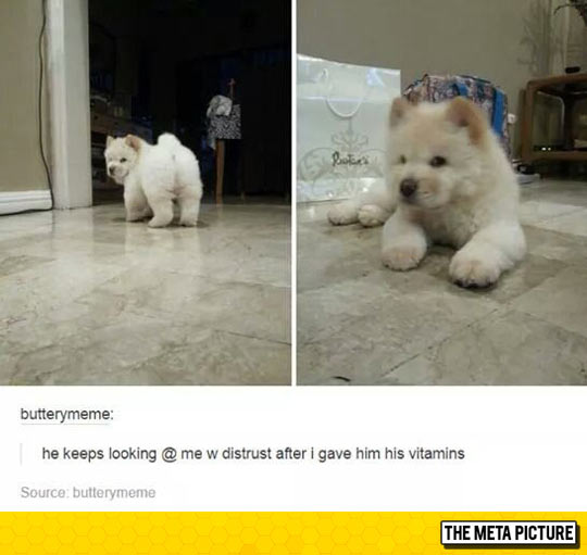 cute-fluffy-angry-dog-puppy