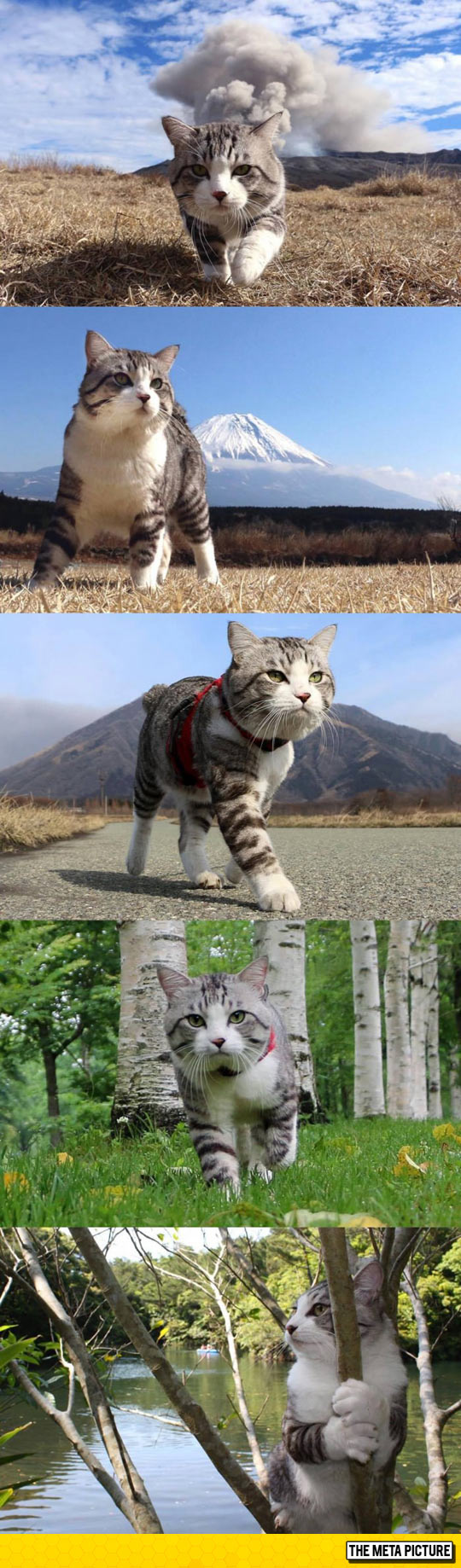 cute-kitten-walking-mountain-volcano