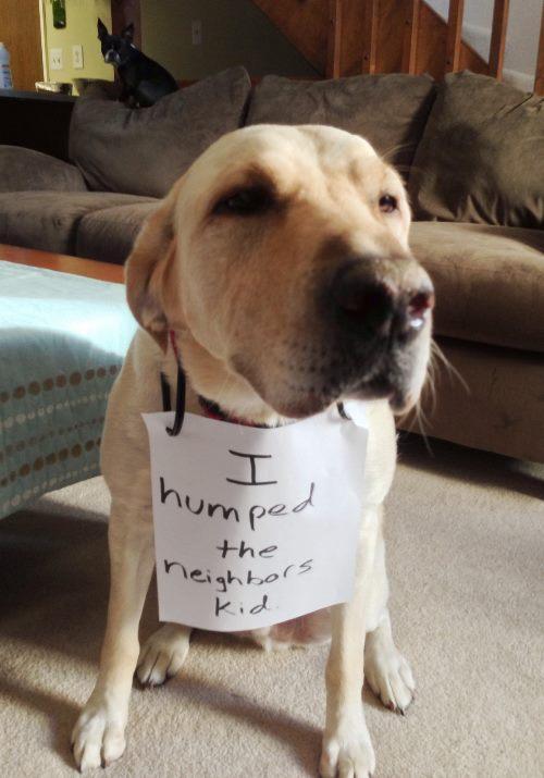 dog-humping