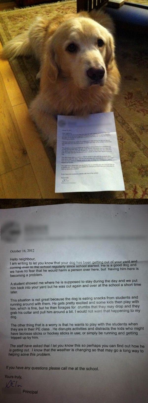 dog-shaming-letter