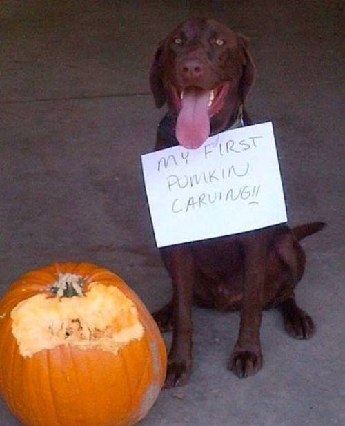 dog-shaming-pumpkin-carving