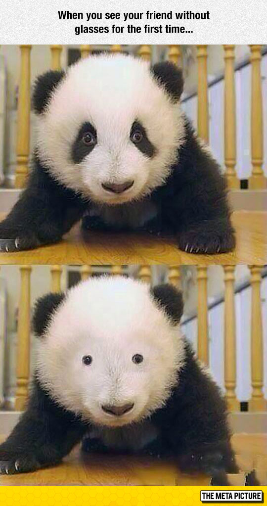 funny-Panda-with-glasses-before-after