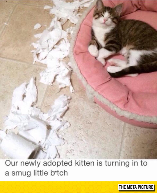 funny-adopted-smug-little-kitten