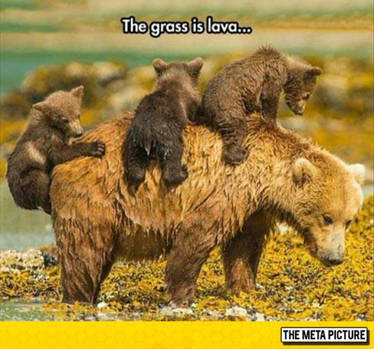 Bear Cubs At Play