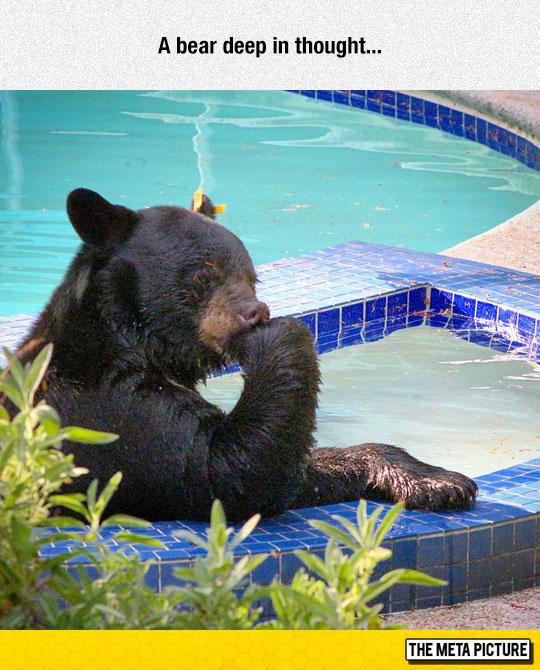 funny-bear-thinking-pool-water