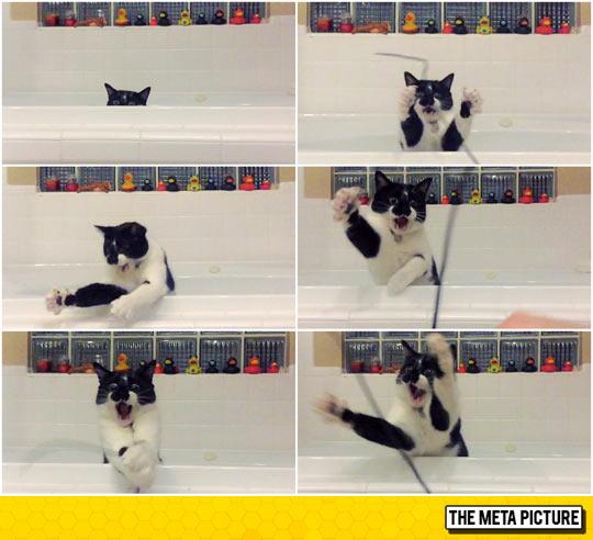 funny-cat-bath-playing-string