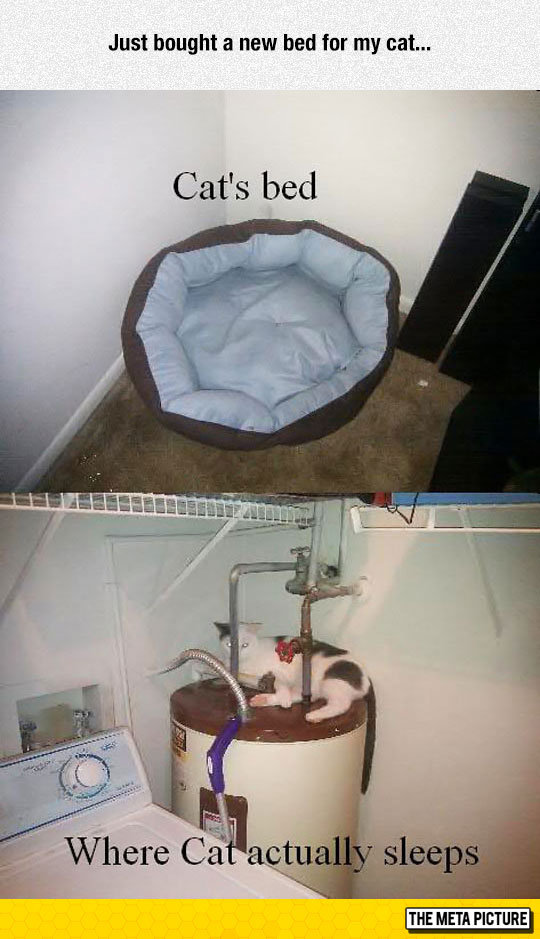 funny-cat-bed-water-heater-basement