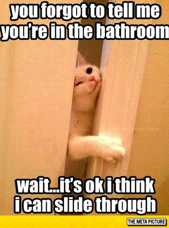 funny-cat-squeezing-through-door-bathroom
