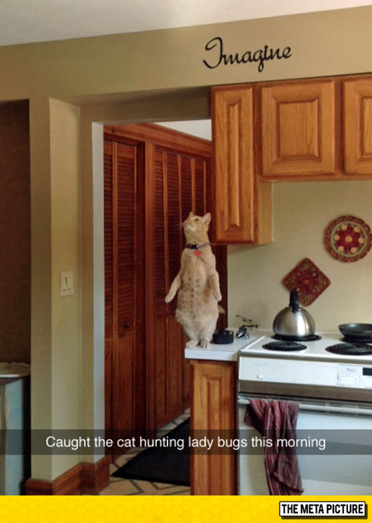 funny-cat-turkey-cooking-pan-ornaments