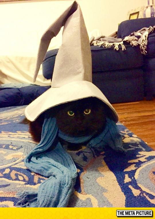 funny-cat-wizard-hat-magic