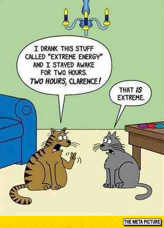 funny-chair-table-cats-comic-conversation