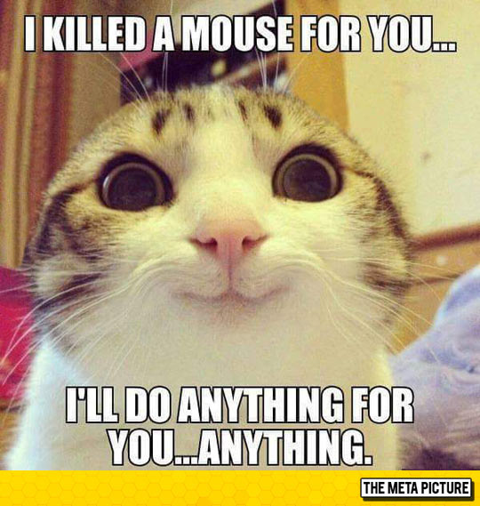 funny-crazy-cat-meme-eyes