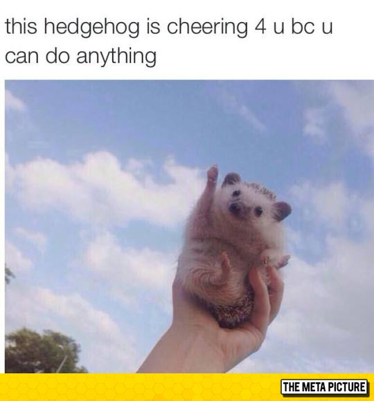 funny-cute-hedgehog-cheering-hand