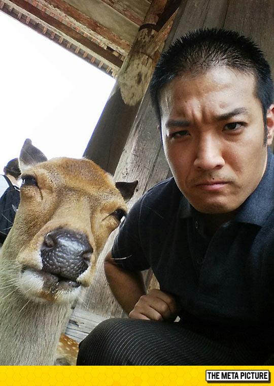 funny-deer-selfie-Asian-man