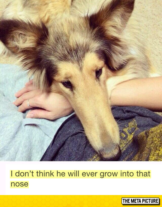 funny-dog-big-nose-grow