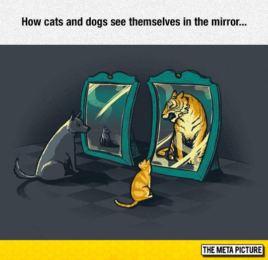 How They See Themselves In The Mirror
