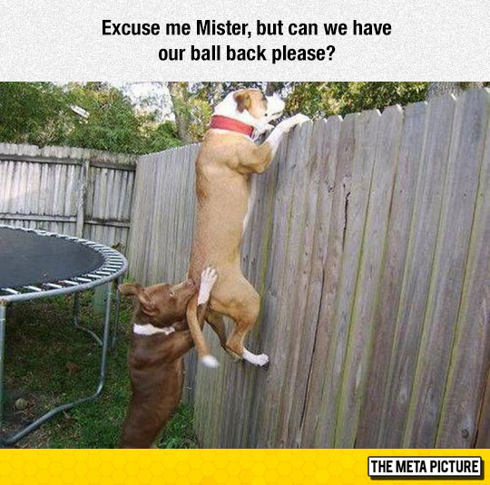 funny-dog-friends-looking-over-fence