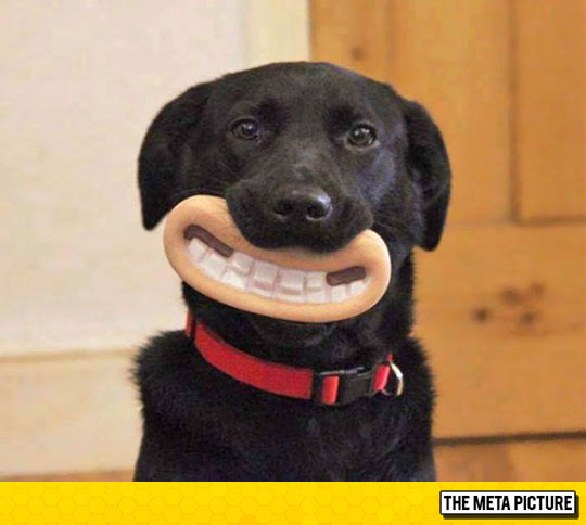 funny-dog-mouth-Wallace-Gromit