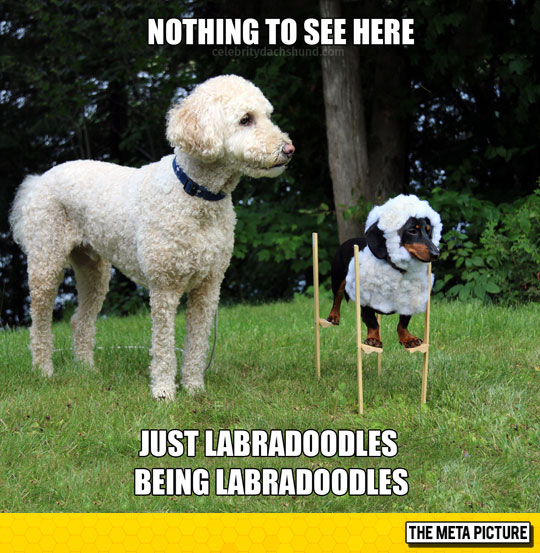 funny-dog-sheep-disguise-friend