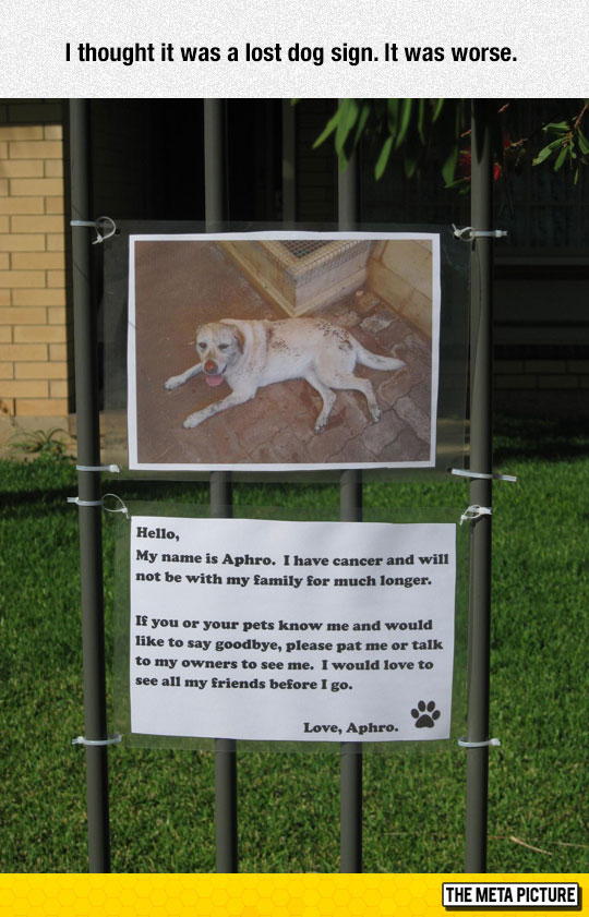 funny-dog-sign-warning-grass-house