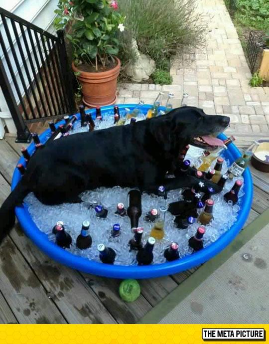 funny-dog-sleeping-ice-bucket-bottles